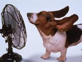 犬熱中症対策